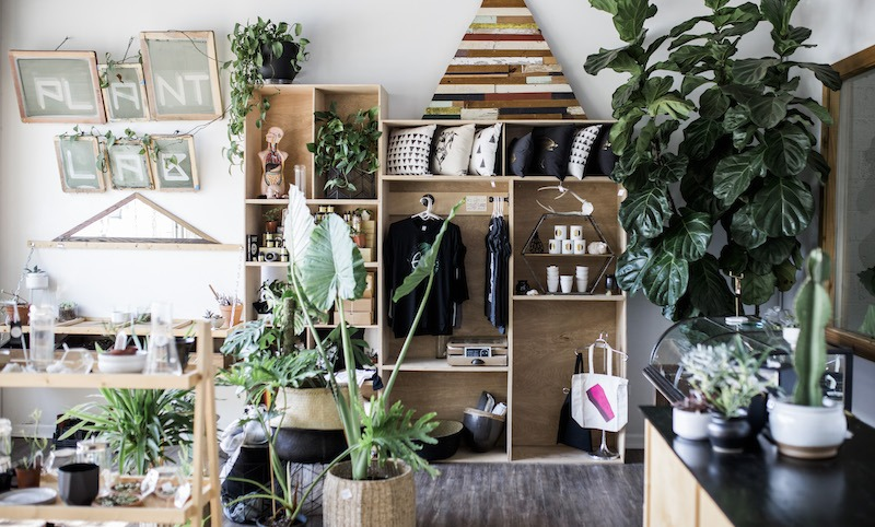 For The Love Of Plants: Why You Need Houseplants + Which Ones To Start With If You're A Newbie